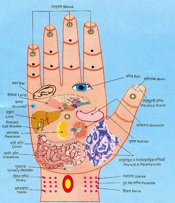Connection from Hand Areas to Body Organs - You can use Self-Shiatsu (deep pressure massage) on your own hands to stimulate them. http://www.energyshiatsu.com