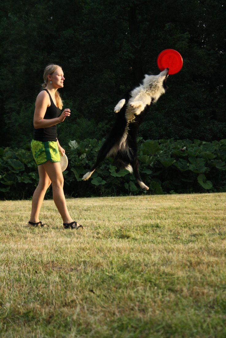 border collie Asheera Banataj Wind dogfrisbee training