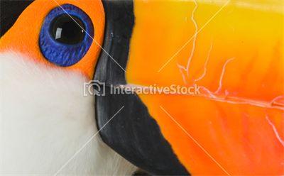 Tukan artysta  #piękne #zwierzęta #kolory #kontrast #intensywność #natura #dzikość