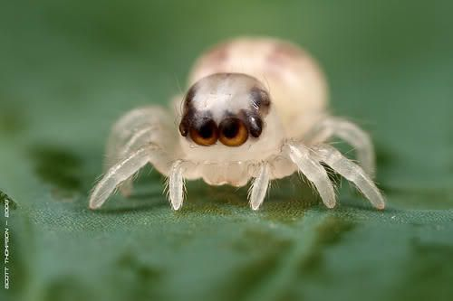 cute baby deadly spider