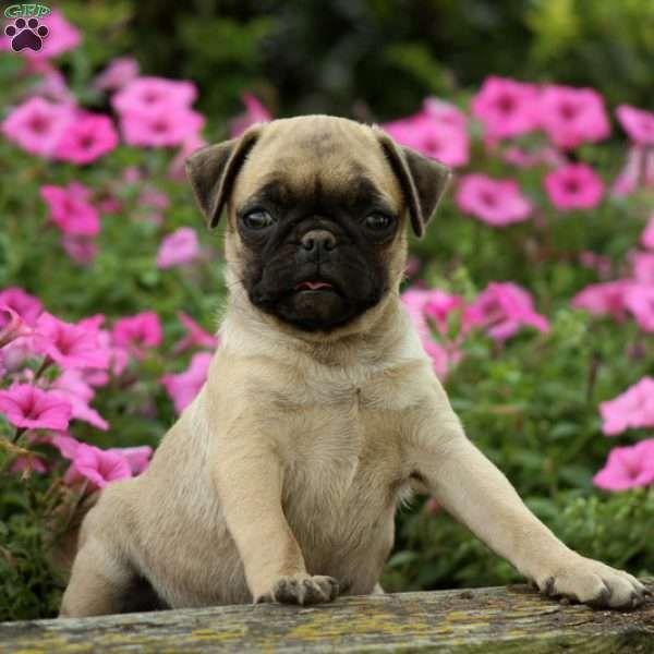 Zoe, Jug Puppy