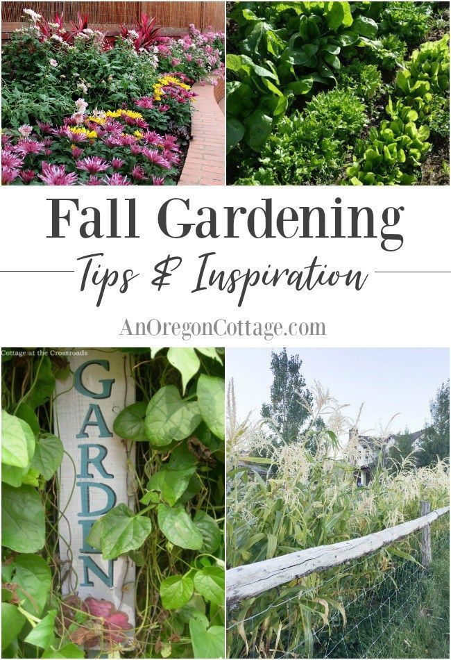 2017 Best Bloggers 39 Best Garden Ideas Images On Pinterest