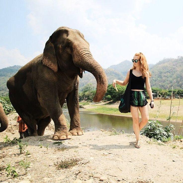 The Elephant Sanctuary, Chiang Mai