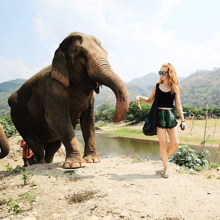 The Elephant Sanctuary, Chiang Mai