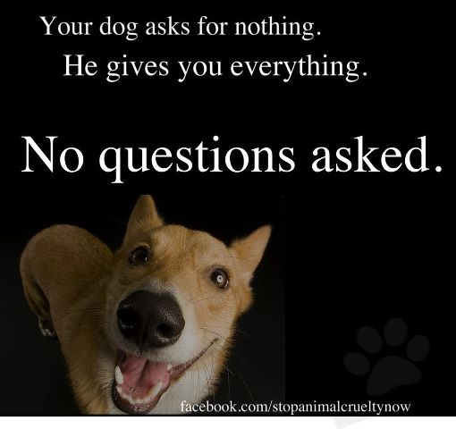 ExactlyAnimal Lovers, Tail Wag, Sweets Dogs, So True, Wag Friends, Animals 3, Dogs Life