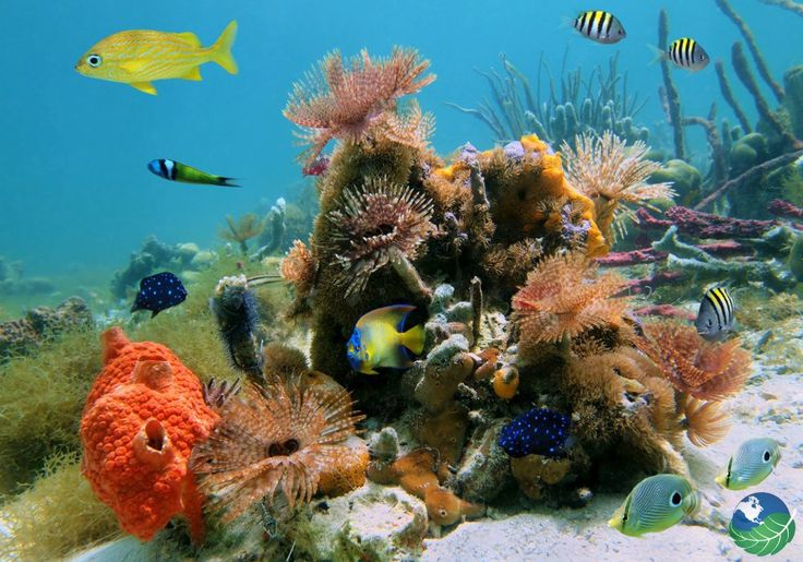 Cahuita Snorkeling Reef - Costa Rica