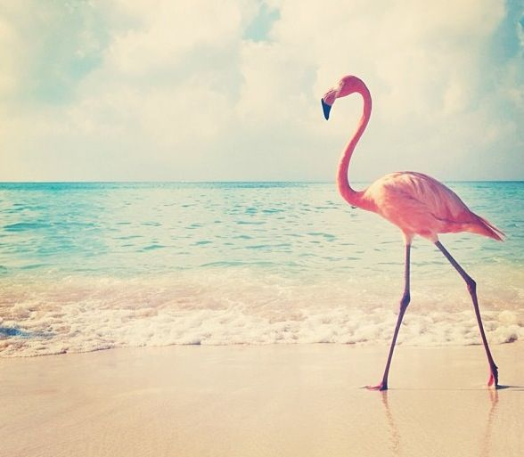 Flamingo print - need to make a trip to Aruba and snap one of these :-)