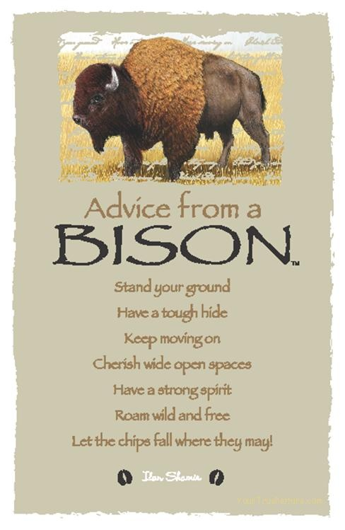 Spirit Totem Animals:  #Advice from a #Bison.