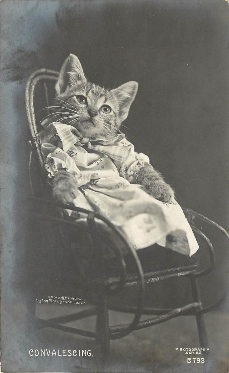 Harry Whittier Frees postcard