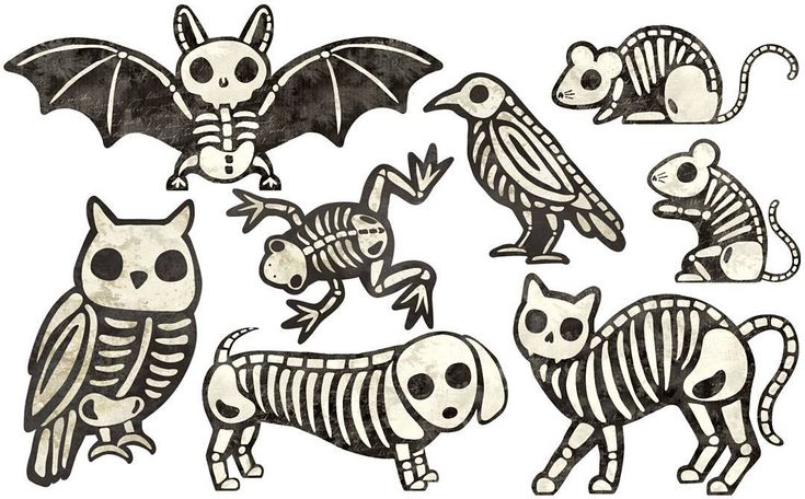 Animal skeletons I made at work. The dog is my favorite. #halloween #illustration