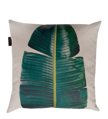 Clinton Friedman's Strelitzia Nicolai scatter cushion