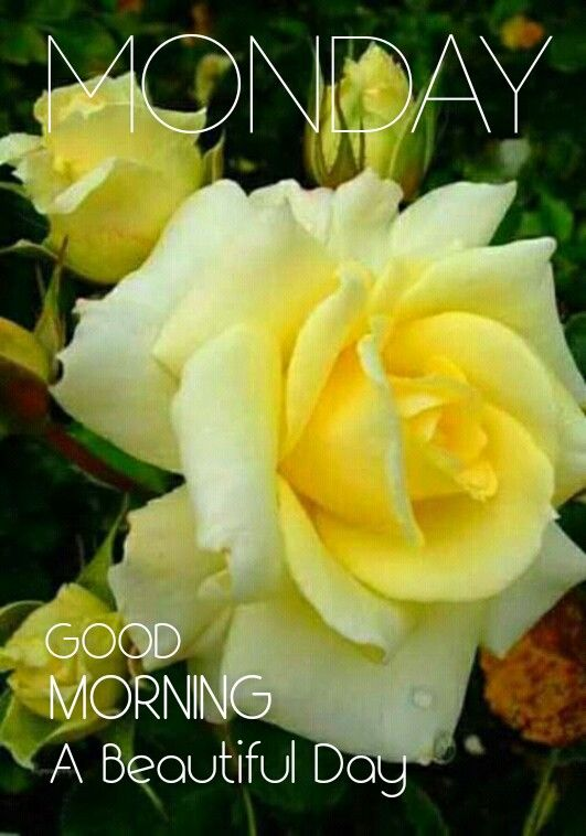 Pin By Debra Thompson On Good Morning Good Morning Yellow Roses