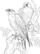 Desenhos de Pássaros para colorir - Páginas de colorir imprimíveis gratuitamente