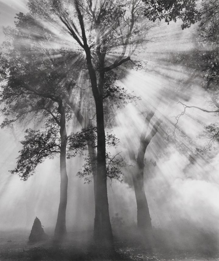 i like the way he has the light coming through the tree, Ansel Adams