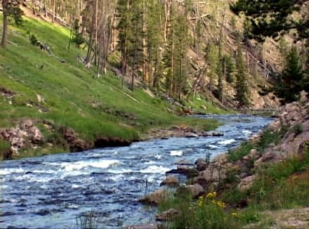 -Fly Fishing the Gibbon River in Yellowstone National Park Wyoming