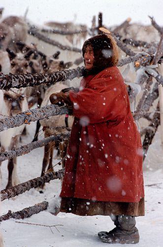 A Komi woman leans against a corral fence at a reindeer herders camp on the Nadym Tundra. Yamal, Western Siberia, Russia.