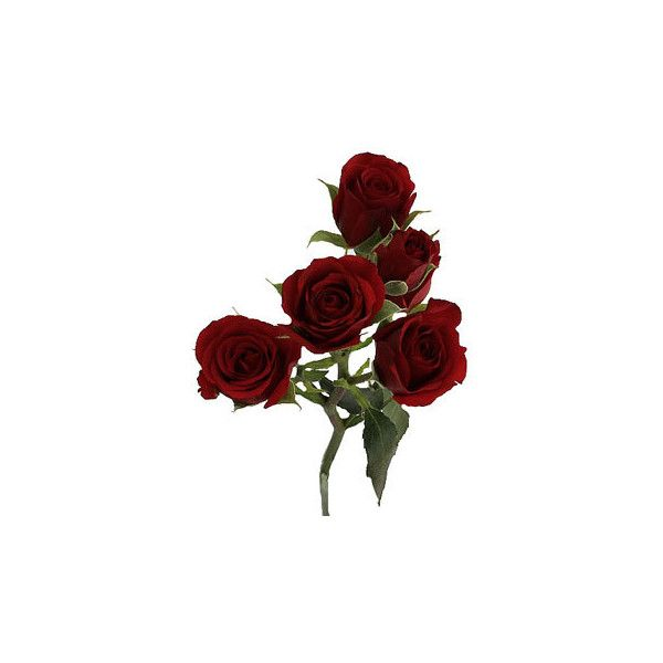 Dark Red Fresh Spray Roses ❤ liked on Polyvore featuring home, home decor, floral decor, rose flower bouquet, rose home decor, rose arrangement, flower home decor and flower centerpieces