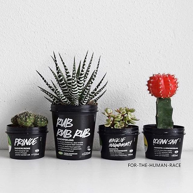Bring back five clean full sized black or clear Lush pots and exchange them for a free fresh face mask on us!  Or you could create your own Lush'topia like @for_the_human_race #LushCosmetics #Lush