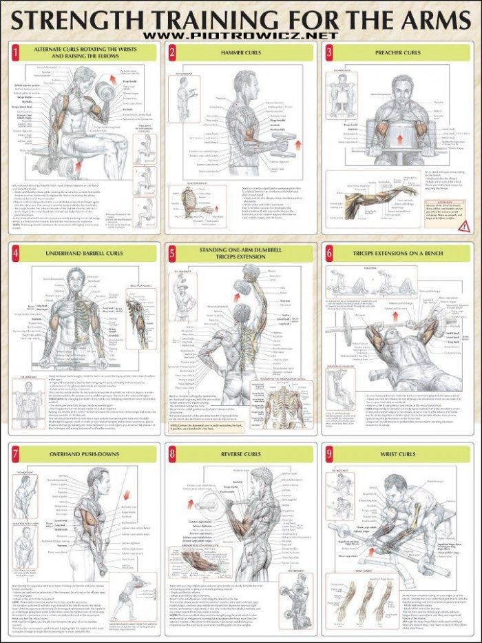 Strength Training For The Arms - Fitness Healthy Exercise Gym - Yeah We Train !