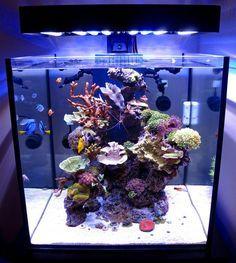 SolanaXL60 Aquarium Lit with PanoramaLEDFixture | by Ecoxotic