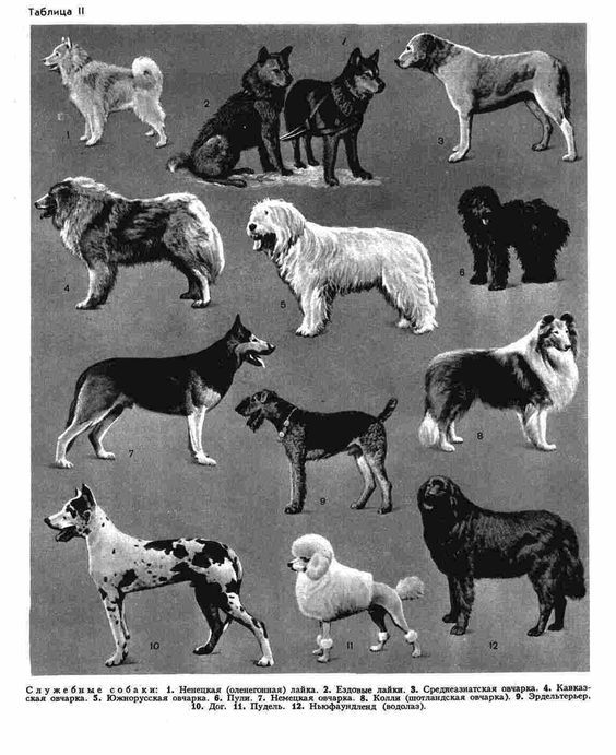 Служебные собаки (БСЭ-3).