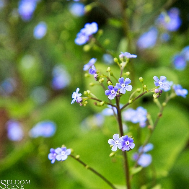 Blue and green by Seldom Scene Photography, via Flickr
