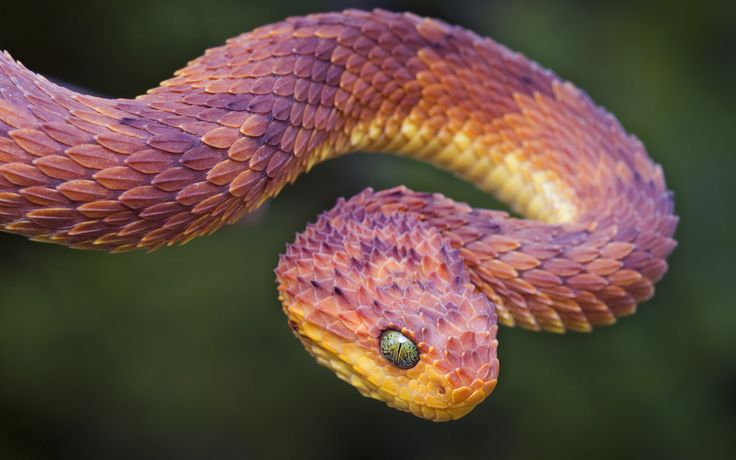 all kinds of snakes images download