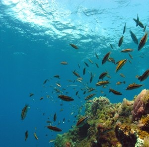 Have you ever wondered what it looks like at the bottom of the sea? What it feels like to swin alongside swarms of mediterrenean fish? Well, Javea has some ideal options for you in that case - http://www.javeavacation.com/