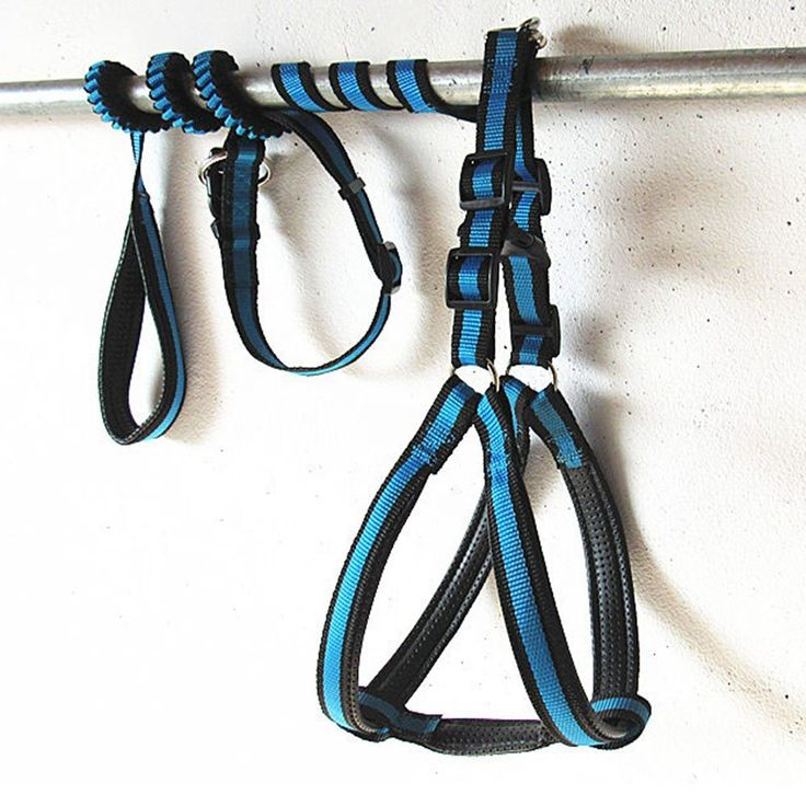 Quno Nylon Non Pull Dog Pet Leash Training Harness and Adjustable Lead with Collar Set Black and Blue -- Visit the image link more details.