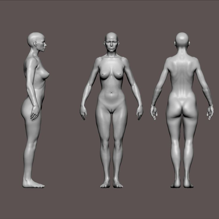 zbrush woman anatomy woman anatomy | anatomy | pinterest | zbrush, Human Body