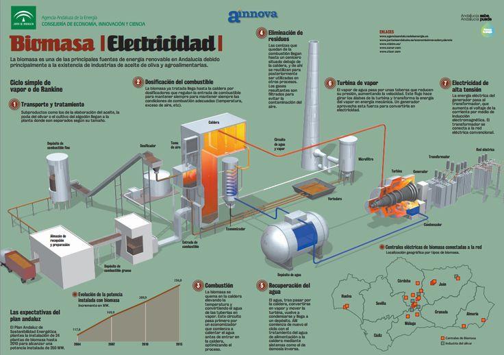 Curiosidades sobre la biomasa como fuente de energía renovable. #curiosidades…