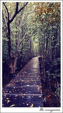 Mangroove - Karimun Jawa