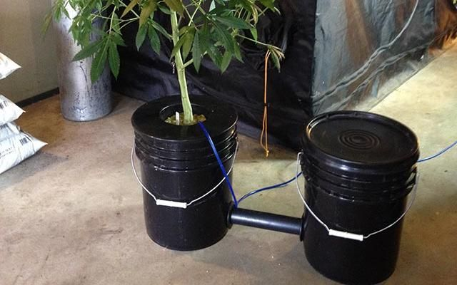 How to Build a Two-Bucket DWC System | High Times