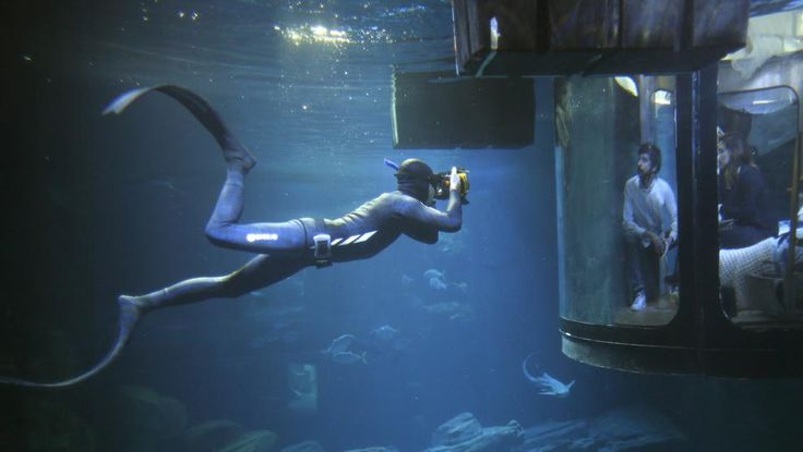 Un buzo que nada entre tibuones fotografía a los espectadores en el acuario de París. Charles Platiau, Reuters