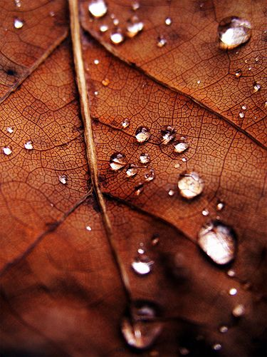 rich colorFall Leaves, Waterdrop, Autumn Leaves, Fall Autumn, Dew Drop, Raindrop, Water Droplets, Rain Drop