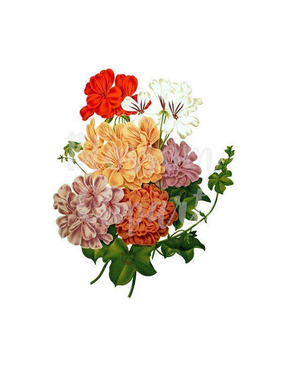 Digital Download Vintage Flower Png Illustration Clipart Vintage Flowers Flower Art Painting Cute Flower Wallpapers