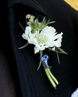 The family corsages will be white scabiosa flowers wrapped in raffia with the stems showing.