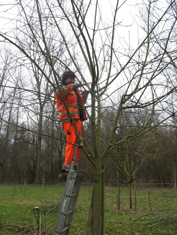 Korschenbroich: Jetzt bewerben für den Einsatz im Bereich Naturschutz