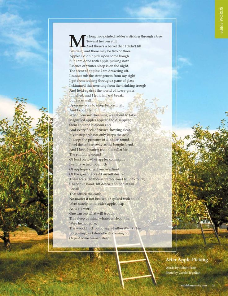 "robert frost birches after apple picking Free essay: robert frost's after apple-picking in the poem ""after apple-picking"", robert frost has cleverly disguised many symbols and allusions."