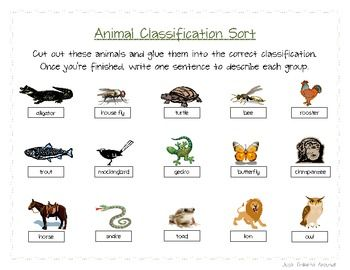 animal classification sort 6 different groups. Black Bedroom Furniture Sets. Home Design Ideas