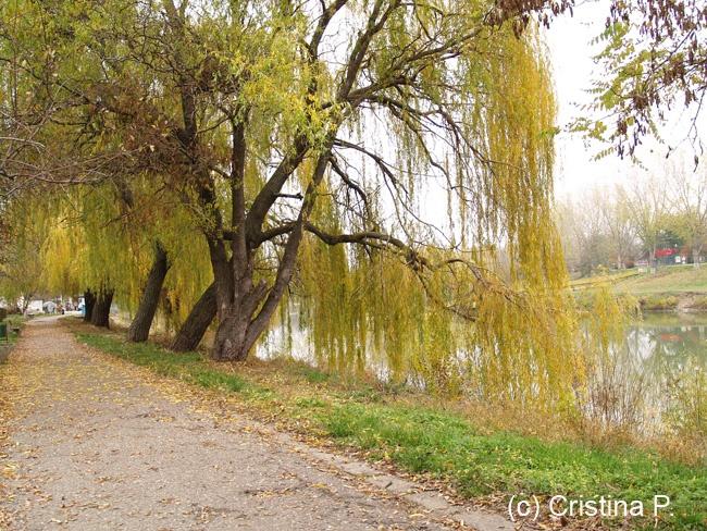 Arad, Romania, Bank of the River Mures (taken Nov 24, 2012, Olympus DSLR)