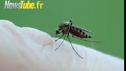 Ils vont ritornareeeeeeee !!!! Les terribles moustiques tigres http://www.dailymotion.com/video/x4a1vw0_ils-vont-ritornareeeeeeee-les-terribles-moustiques-tigres_animals