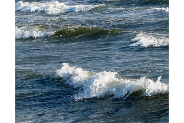 Dropbox - Wild Sea Horses 8x12.jpg