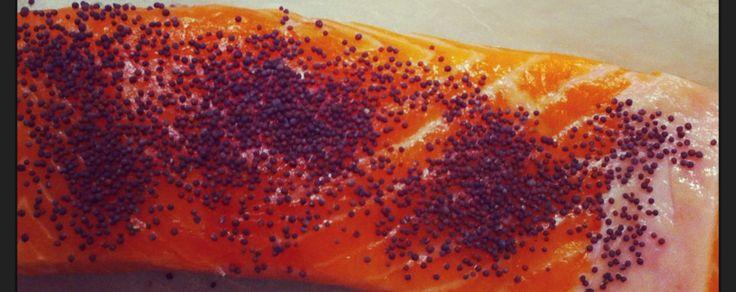 trancio di salmone con semi di senape