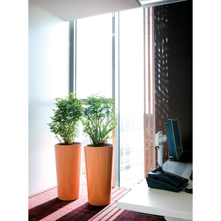 17 best images about interieurbeplanting on pinterest for Interieur beplanting