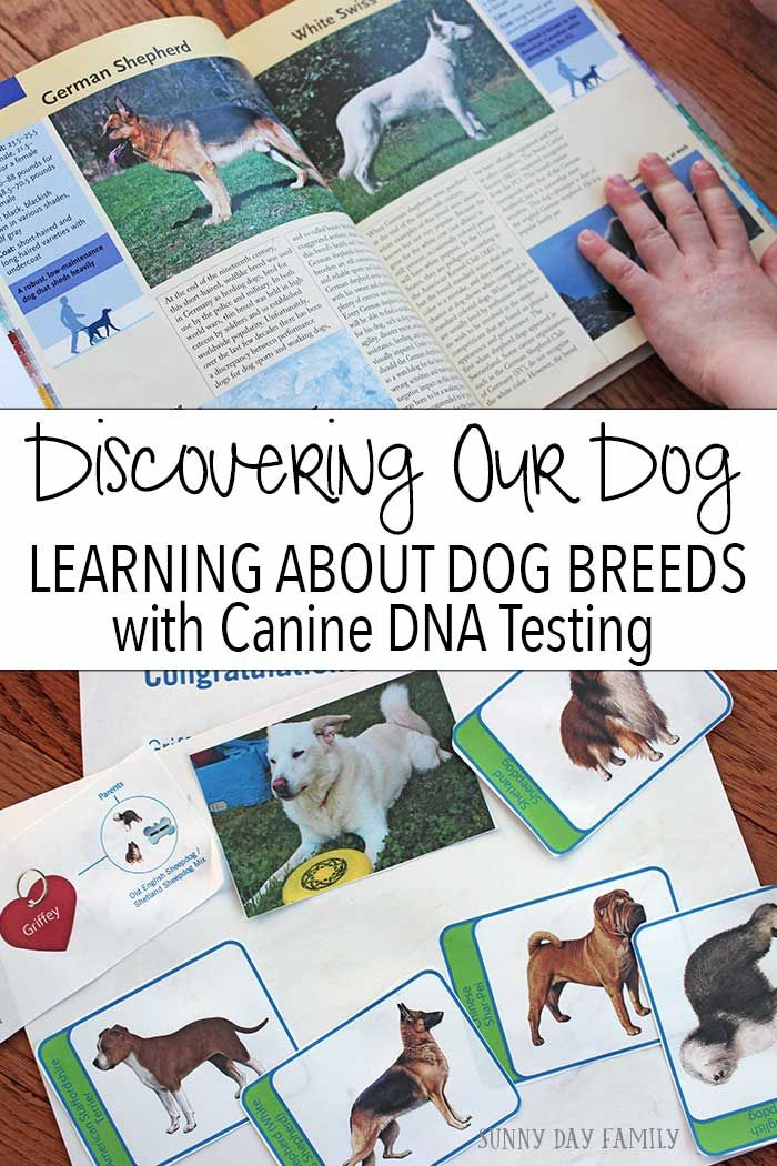 See what we learned about our shelter mutt when we gave him a Wisdom Panel Canine DNA test! A fun activity to help kids learn about dog breeds & ancestry and a great way to learn more about your dog too. You'll never guess what our mixed breed dog is!  AD | WisdomPanelAmbassadors | @WisdomPanel
