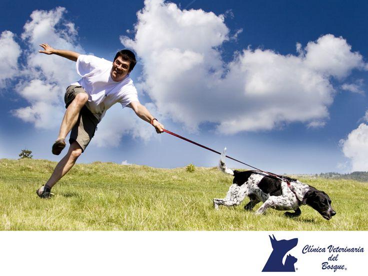 Paseos en días calurosos. LA MEJOR VETERINARIA DE MÉXICO. En un día caluroso hay que tener cuidado al dar un paseo con tu perro. Si lo haces caminar, lo mejor es ir en la mañana o por la noche. Es recomendable caminar con tu perro en la hierba, porque el asfalto caliente puede quemar sus patas, que son a través de las cuales los perros sudan. En Clínica Veterinaria del Bosque le brindamos salud integral a tu mascota. www.veterinariadelbosque.com #veterinariadelbosque