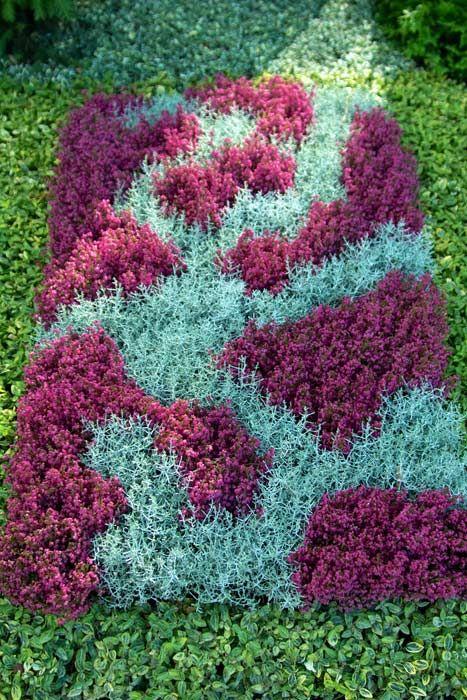 Farbe erhält dieses Beetbild durch das Pink von Erica gracilis und das silbrige Mint der Drahtpflanze.