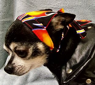 Dog Doo RagsFor the biker dude dog, these adorable doggie doo rags are the perfect headwear for any macho dog. Ties in back and has an adjustable chin strap.Usually ships in 10 business days. In stock items will ship in 1 - 3 business days or with the balance of your order.     Sizes:   Approx. Weight         XXSmall   2-5 lbs  2