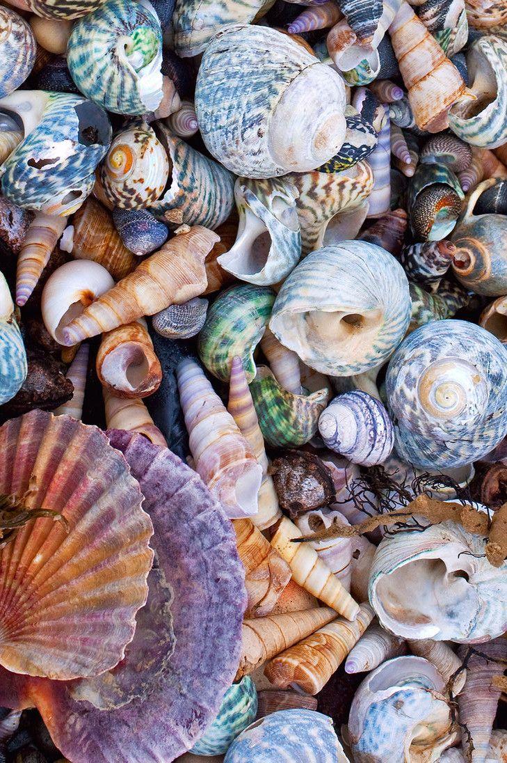 """seafolklore: """"TaroonaMacro 14 Shells by KittenKiss """""""